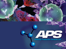 Antibody Production Services
